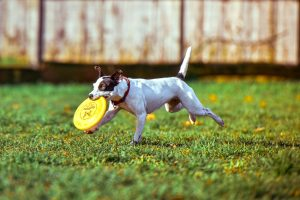 Oakland Park Dog & Frisbee