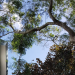 New 2019 Florida Law on Residential Property Tree Removal