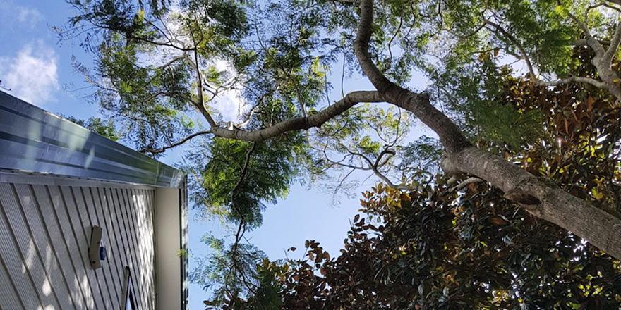 Invasive Tree near house roof